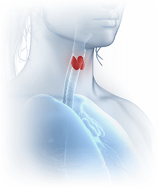 The Thyroid Reboot Guide